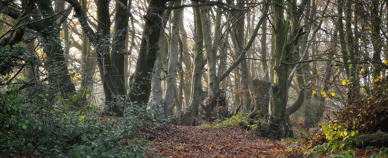 Welsh Newton Common